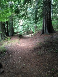 [Image is a dirt path with sun filtering through the cedar trees]